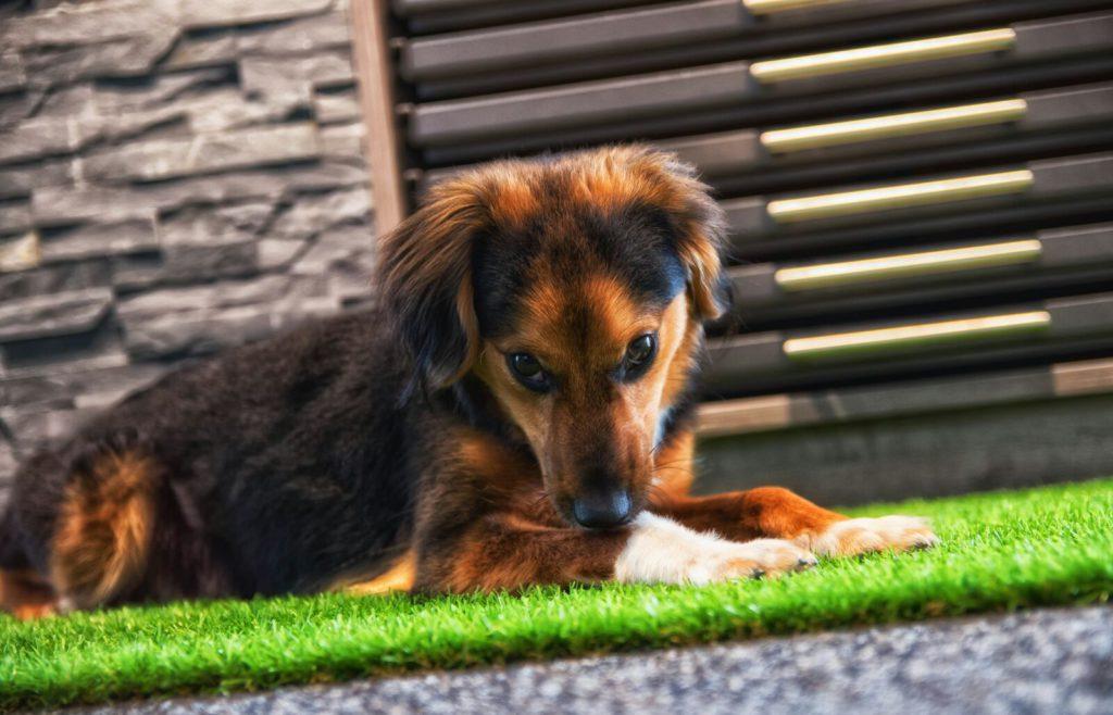 Hund Reiter Fliesen