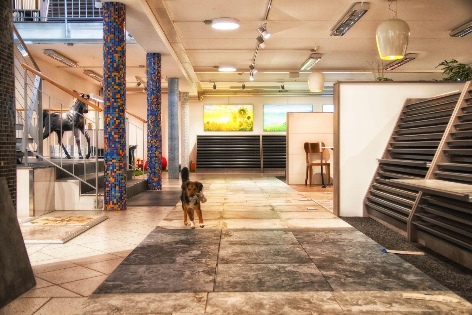 Ausstellung Reiter Fliesen mit Hund